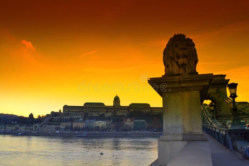Budapest-Hängebrückelöwe stockfotografie
