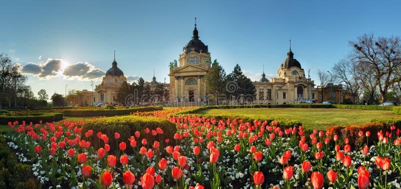 Budapest - panorama de la primavera con la flor, balneario de Szechenyi, Hungría fotografía de archivo