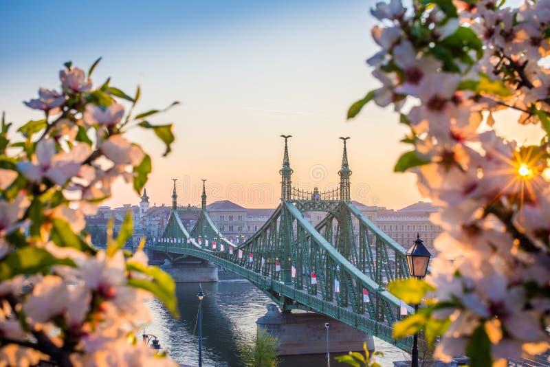 Budapest, Ungarn - schöner Liberty Bridge bei Sonnenaufgang mit Kirschblüte und Morgensonne stockfotos