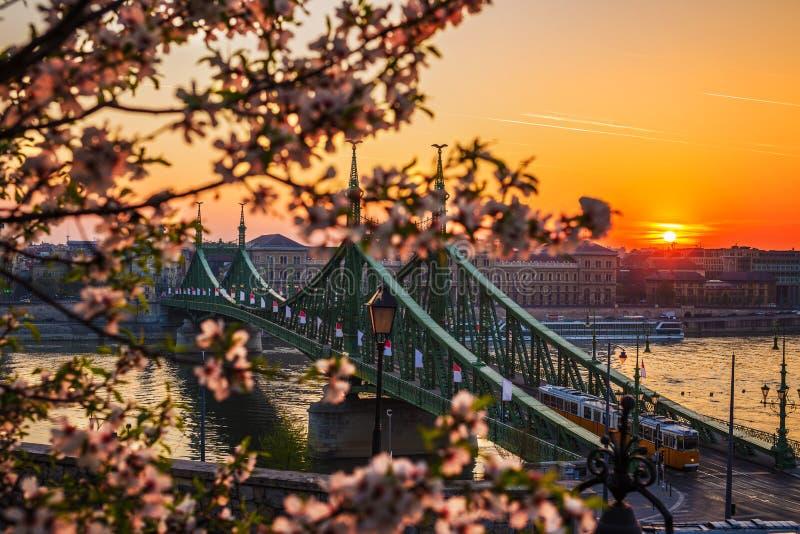 Budapest Ungern - härliga Liberty Bridge på soluppgång med den typiska gula ungerska spårvagnen och den körsbärsröda blomningen arkivbilder