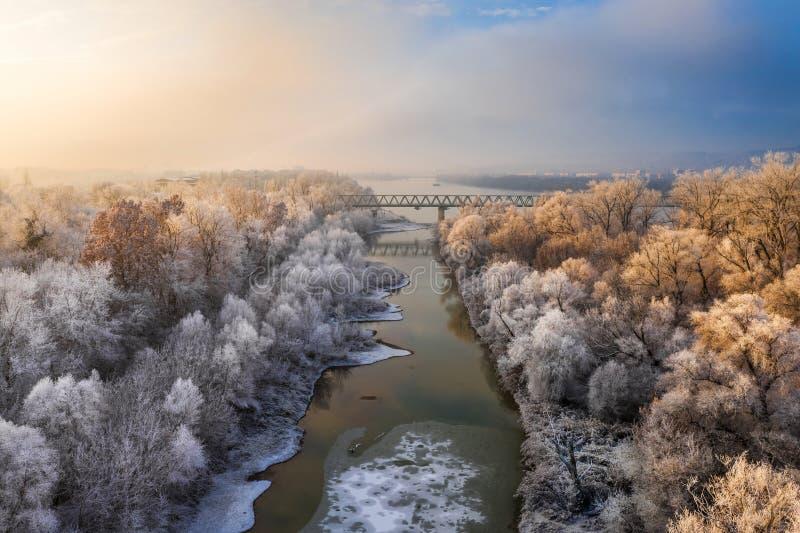 Budapest, Ungheria - alberi glassati ad alba con il ponte ferroviario e l'isola immagine stock