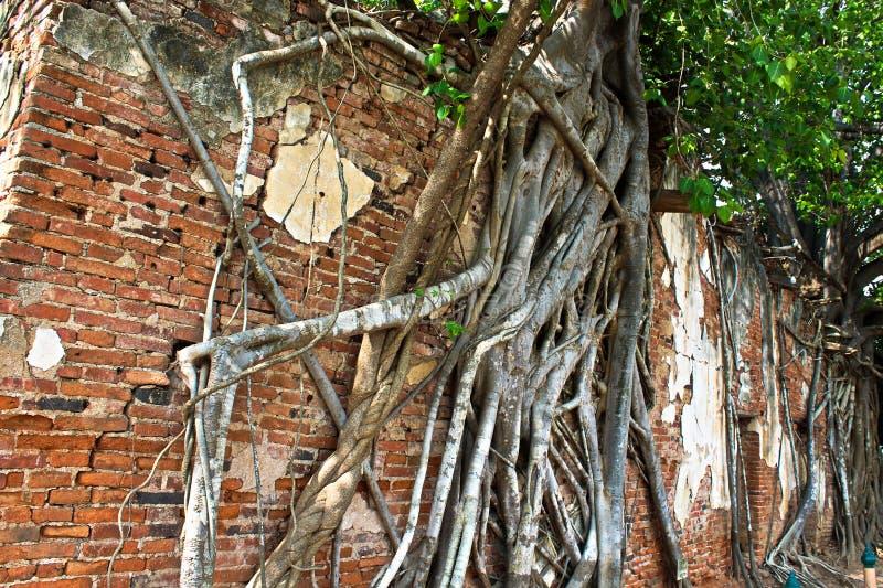 3 Budas em Ang Thong Tree Temple foto de stock royalty free