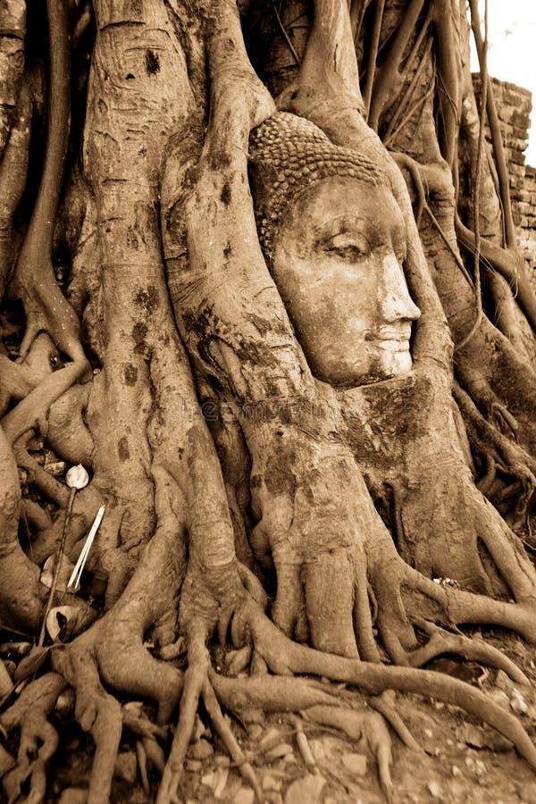 budda顶头根石结构树 免版税库存图片