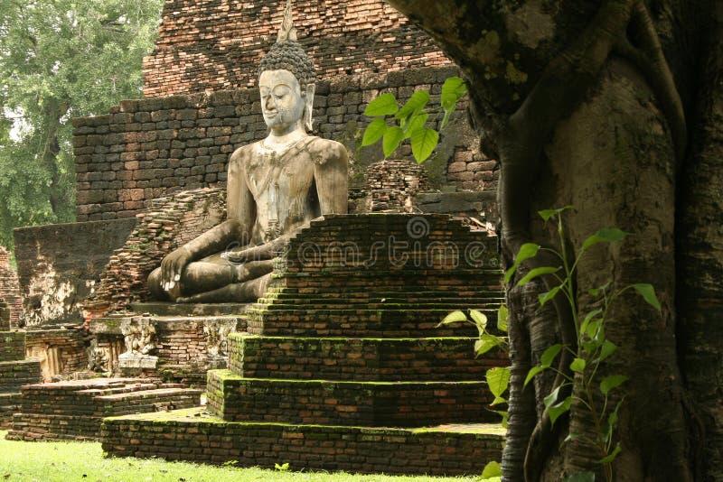 budda dżungli rujnuje sukhothai świątynię. obraz stock