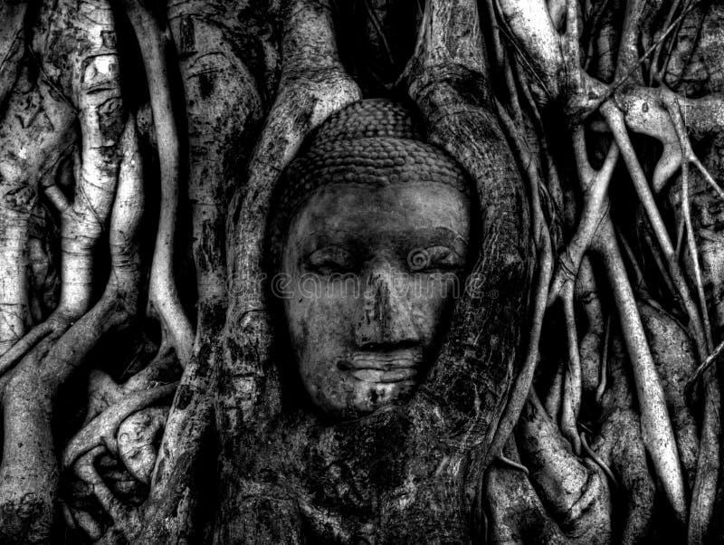 Buddahhoofd met boomwortels wordt overwoekerd in de oude stad die van Ayutthaya stock afbeeldingen