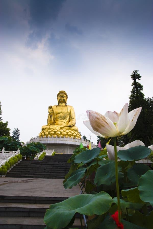 Free Buddha And Lotus Stock Image - 8376761