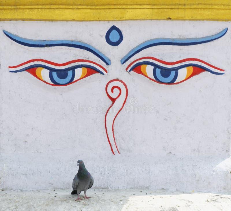 Buddha-Augen stockfotos