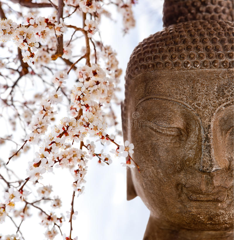 Buddha and cherry blossoms. Buddha face with cherry blossoms stock photos