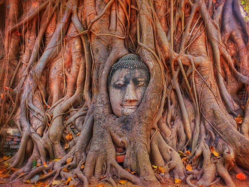 Buddha dentro immagine stock libera da diritti