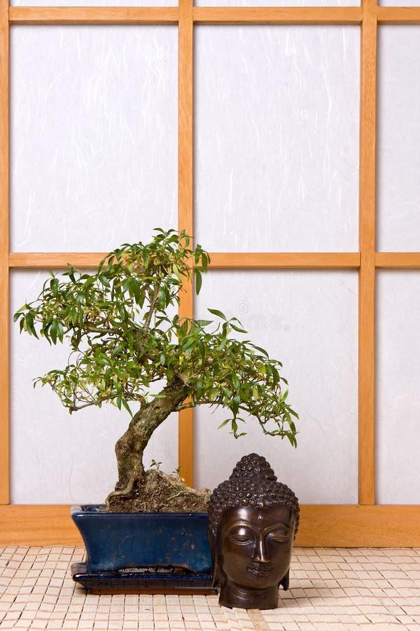 Buddha e bonsais fotografia de stock