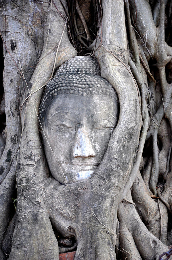 Buddha Face inside the Tree 1 royalty free stock photos