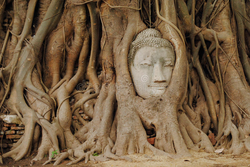 Buddha face in the tree royalty free stock photography