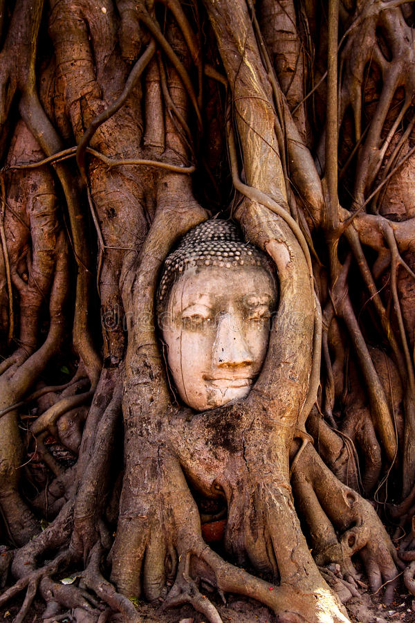Buddha face in the tree, Thailand stock photography