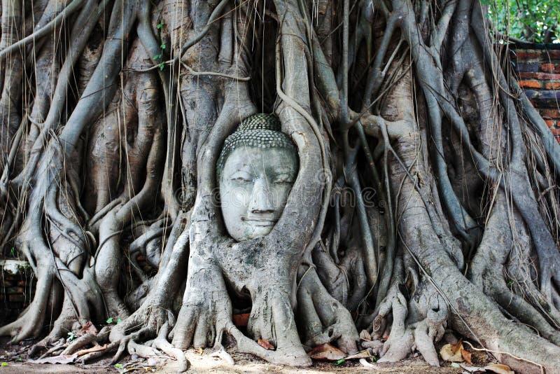 Buddha głowa zdjęcie stock