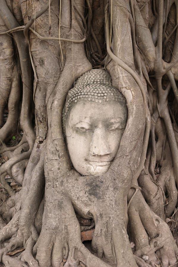 Buddha głowa fotografia royalty free