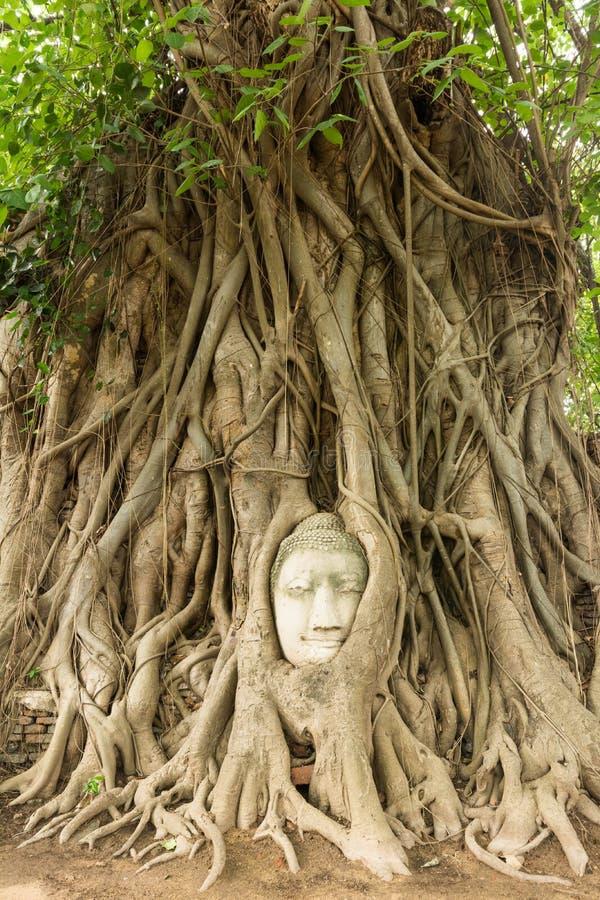 Download Buddha Głowa W Bo Drzewa Korzeniu (UNESCO światowe Dziedzictwo) Zdjęcie Stock - Obraz złożonej z korzeń, tajlandia: 41952534
