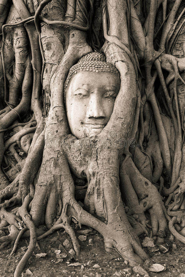 Buddha głowa w drzewo korzeniach w Wacie Mahathat fotografia stock