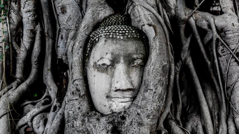 Buddha głowa Wat Pramahatha fotografia stock