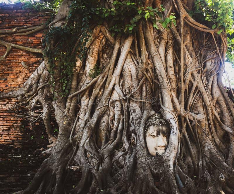 Buddha g?owa zdjęcia stock