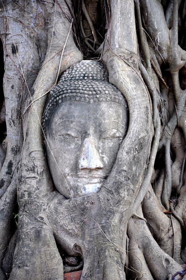 Buddha-Gesicht innerhalb des Baums 1 lizenzfreie stockfotos