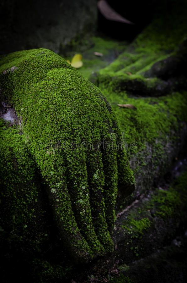 Buddha hand covered in moss stock photos