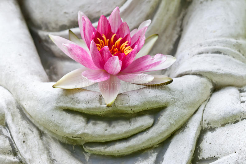 Buddha hands holding flower. Close up stock photography