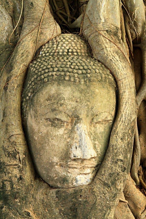 Buddha head. The buddha head status in the root stock photography