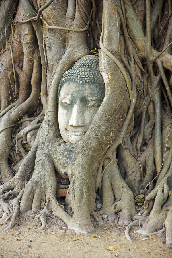 Buddha head entwined tree roots in Ayutthaya royalty free stock photography