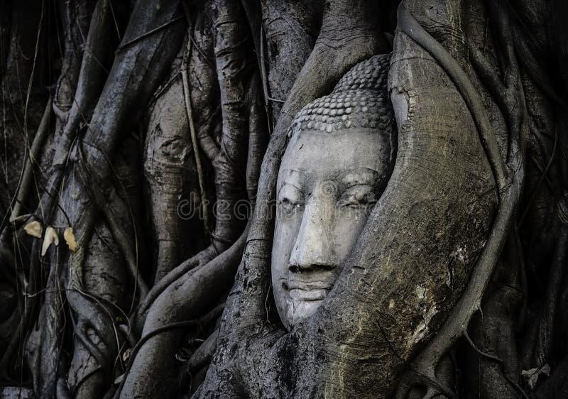BUDDHA HEAD IMAGE IN TRUNK stock image