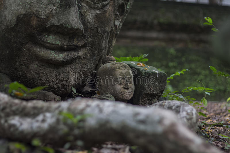 The Buddha Head Sculpture stock images