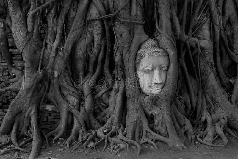 Buddha Head statue, Wat Mahathat, Ayutthaya, Thailand royalty free stock image