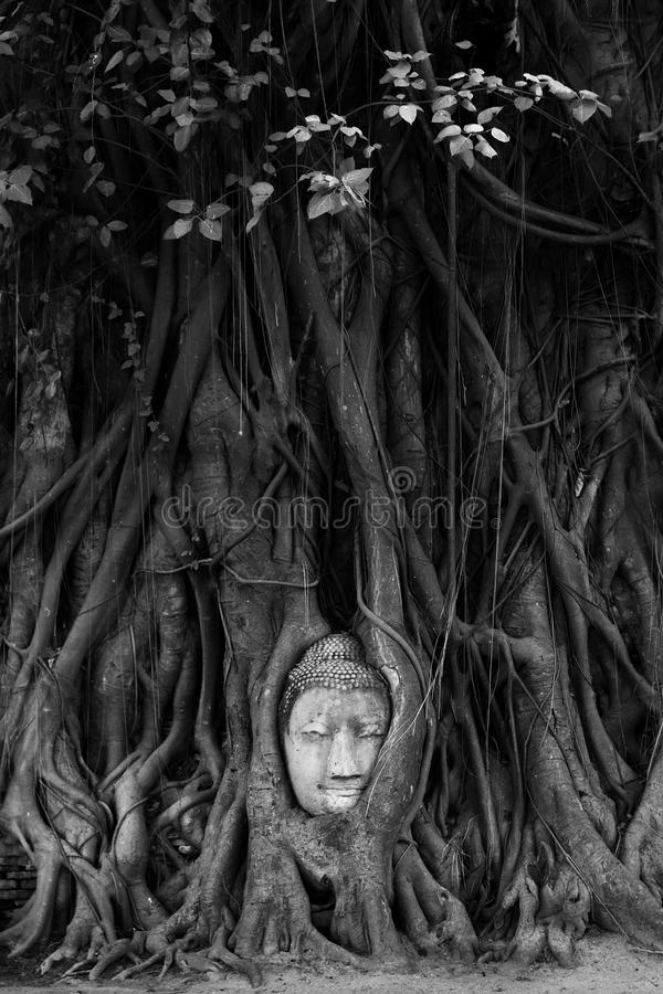 Download Buddha Head In Tree Roots Royalty Free Stock Images - Image: 33338379