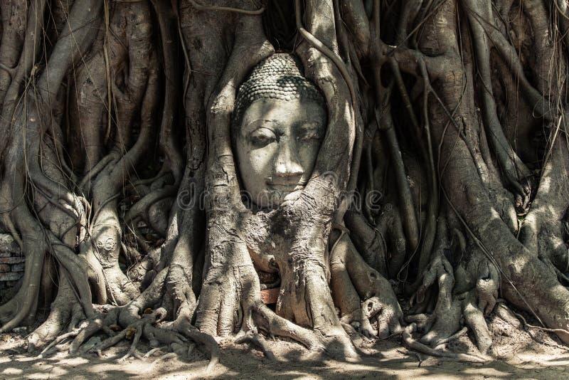 Buddha Head in Tree Roots. Ruins of Wat Mahathat, UNESCO World Heritage, Ayutthaya, Thailand stock photo
