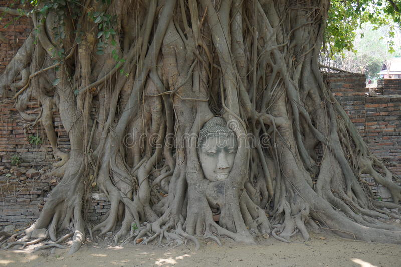 Buddha Head in Tree Roots, Wat Mahathat, Ayutthaya stock photos