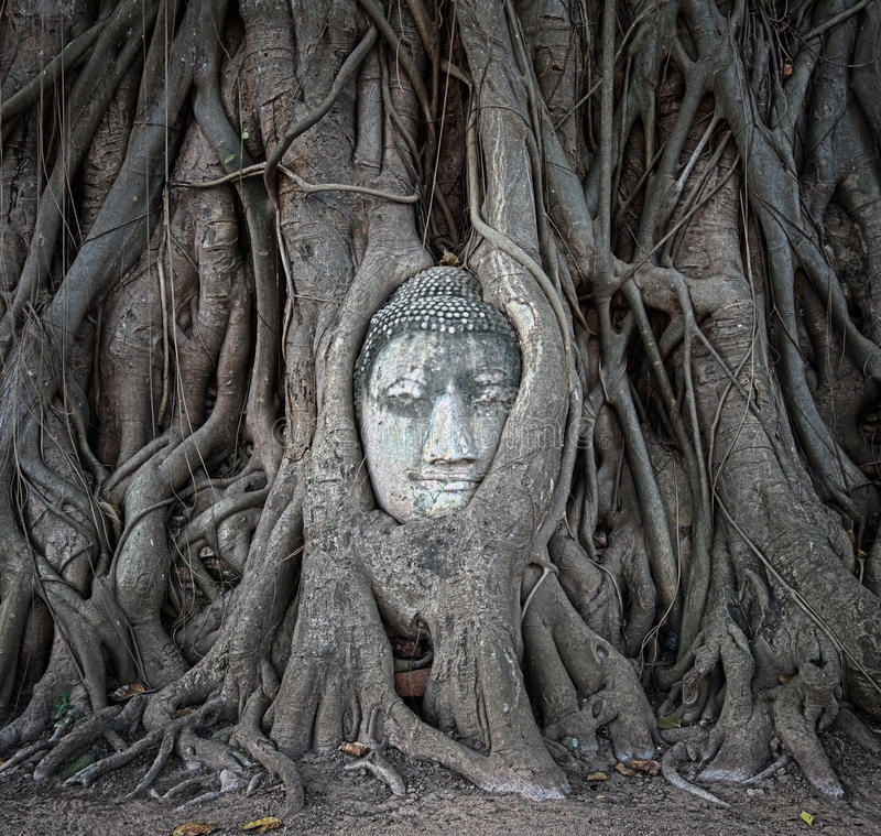 Buddha head in tree roots at Wat Mahathat, Ayutthaya, Thailand. royalty free stock photography