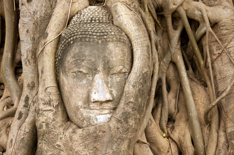 Download Buddha head in vines stock photo. Image of surrounded - 19647724