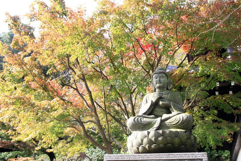 Buddha image and Autumn leaves in Hasedera. Kamakura stock images
