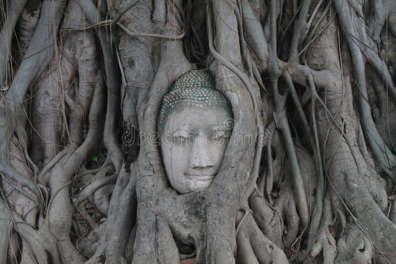 Buddha-Kopf lizenzfreie stockbilder