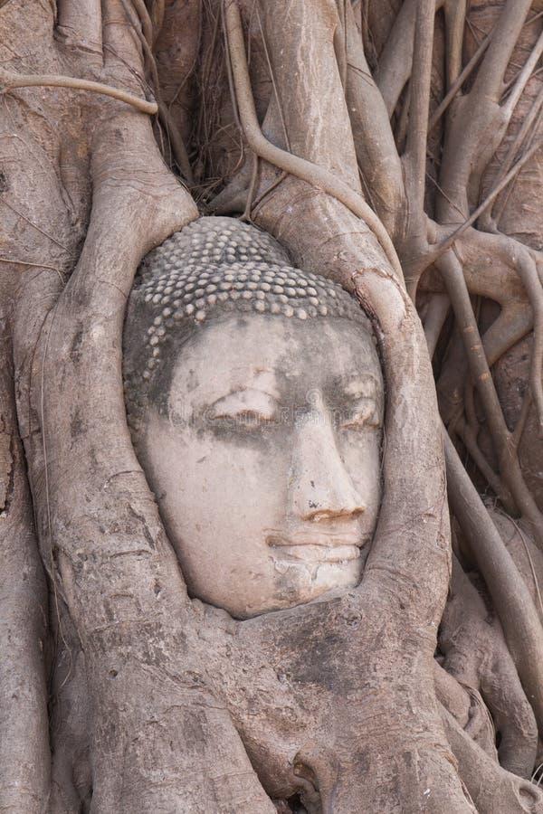 Buddha-Kopf in den Baumwurzeln lizenzfreies stockbild