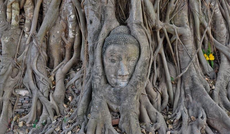 Buddha-Kopf in den Wurzeln eines Baums stockfoto