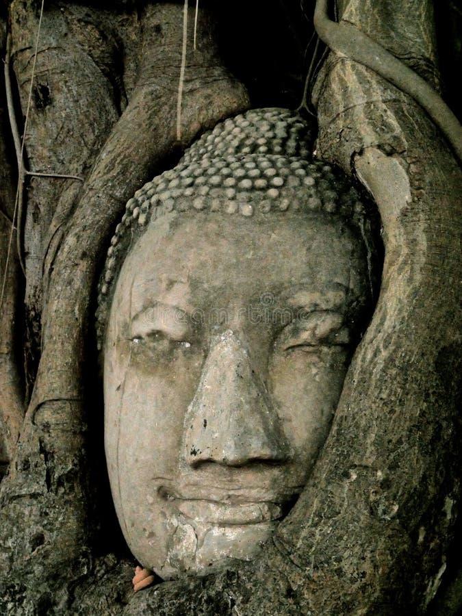 Buddha-Kopf im Baum stockbilder