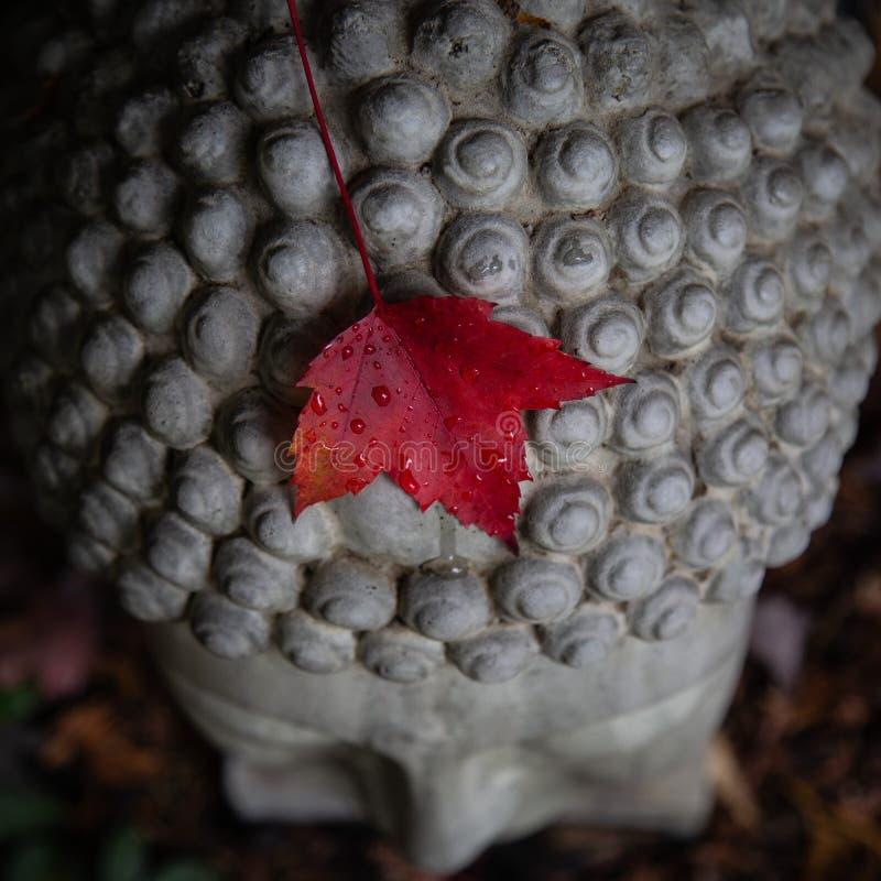 Buddha leaf royalty free stock images
