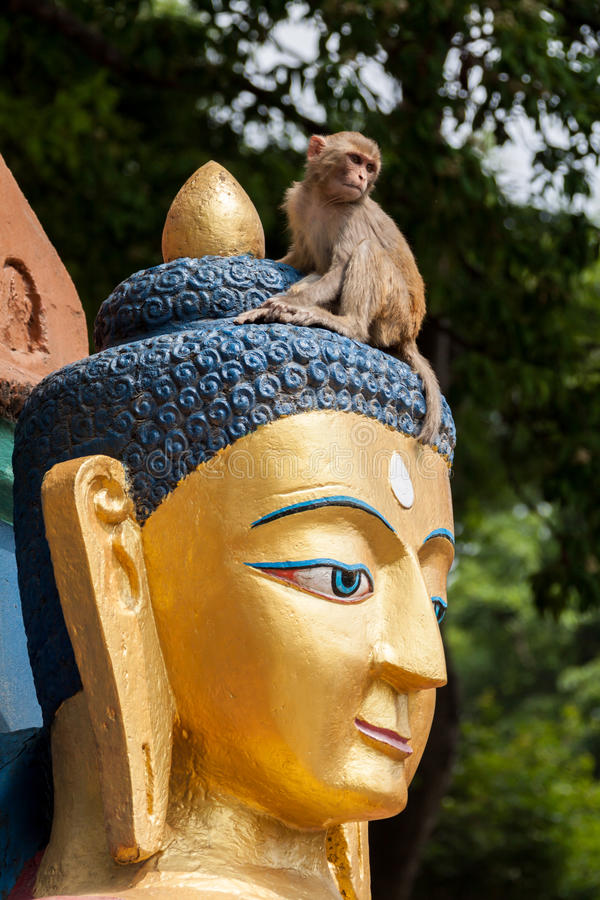 Buddha and Monkey. A monkey plays on top of the head of a huge buddha in Nepal royalty free stock photography