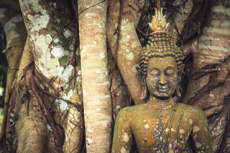 Buddha mossy stone sculpture among banyan tree trunks and roots as Asia travel background. Buddha mossy stone sculpture among banyan tree trunks and roots as stock photos
