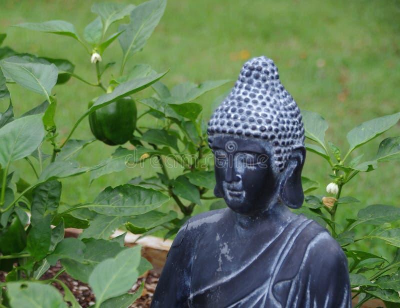 Buddha ogródu rzeźba z zielonymi dzwonkowymi pieprzami zdjęcie stock