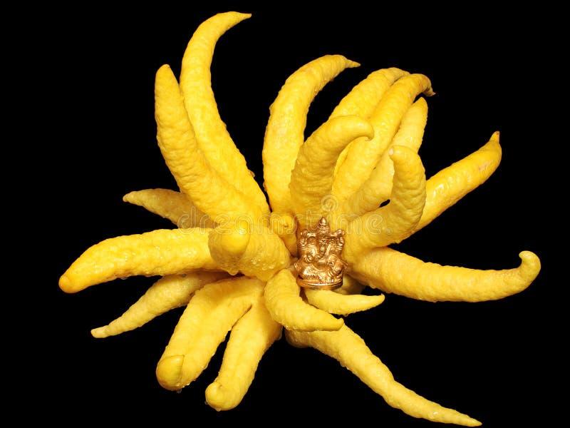 Download Buddha's Hand Lemon And Buddha Stock Photo - Image: 7362358
