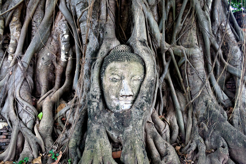 Download Buddha's Head In Banyan Tree Roots, Ayuthaya Stock Photo - Image: 10975846