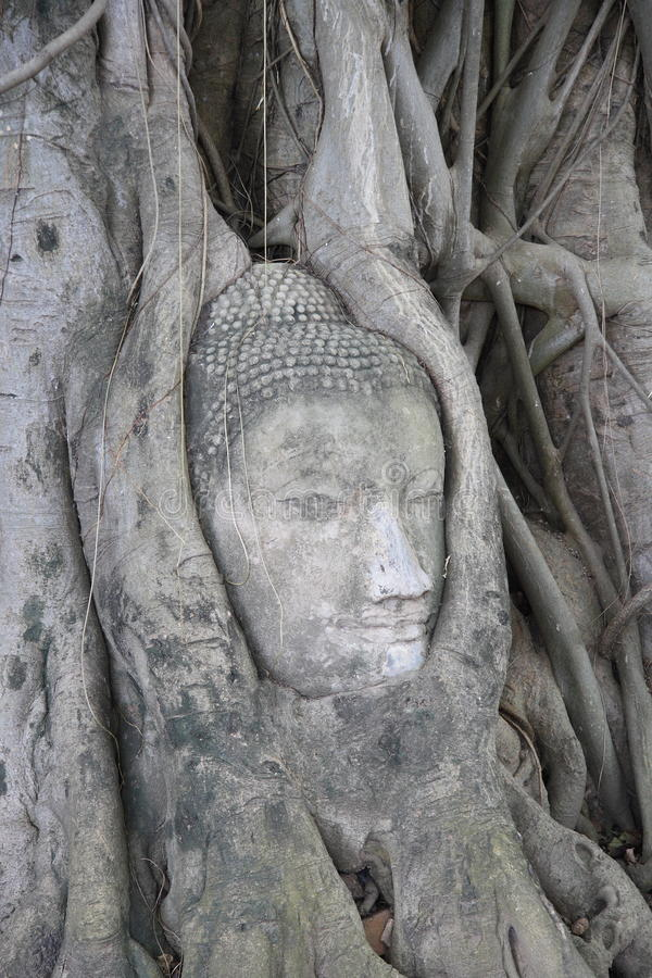 Download Buddha's head in roots stock image. Image of root, background - 19344935