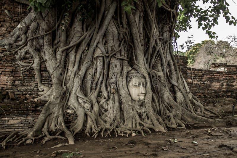 Buddha-` s Kopf in einem Baum, Ayutthaya lizenzfreie stockbilder