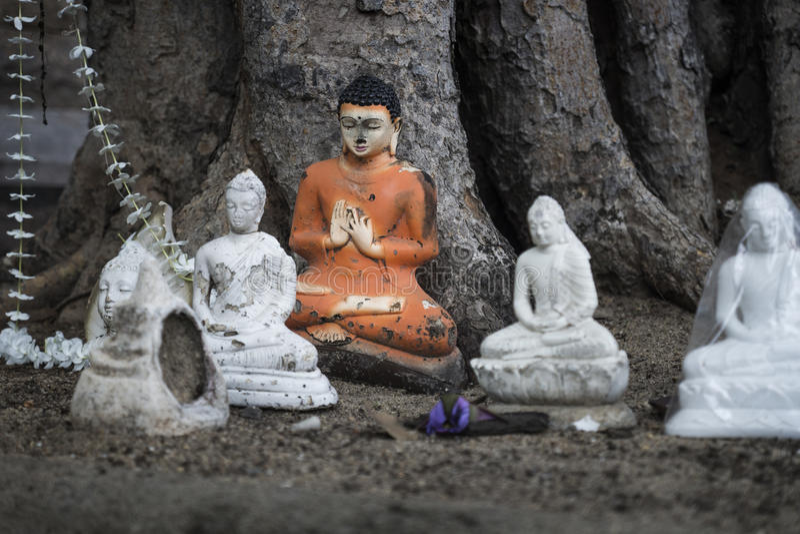 Buddha sacrifices under the bodhi tree, Anuradhapura, Sri Lanka. Buddha Statues detail under a tree stock photography